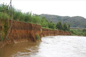 Lâm Đồng: Sạt lở bờ sông, nhiều diện tích đất bị 'hà bá' nuốt trôi