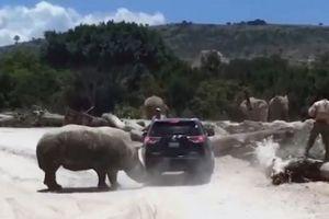 Kinh hoàng cảnh tê giác tấn công xe ôtô của khách du lịch