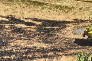 Hy hữu: Nướng vịt 'cháy' mất 88,2 triệu đồng