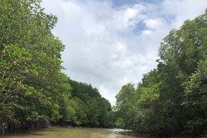 Bảo vệ rừng phòng hộ Cần Giờ
