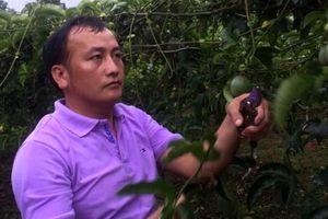 Ngọt ngào chanh leo Thuận Châu