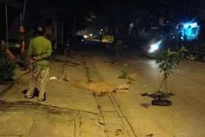 Hà Nội: Bàng hoàng phát hiện hai nam thanh niên thương vong cạnh chiếc xe máy lúc nửa đêm