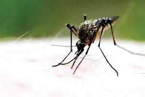 Nắng nóng giết muỗi