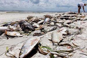 Hiện tượng đáng sợ khiến hàng nghìn sinh vật chết đột ngột ở Mỹ