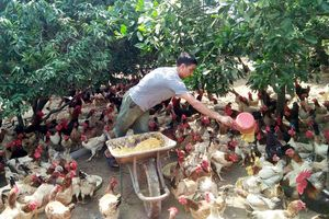 Phong trào thi đua sản xuất, kinh doanh giỏi: Động lực giúp nông dân làm giàu