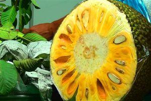 Mít xanh non thành mít chín vàng: Dân buôn không ăn