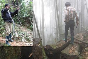 Liều mạng vào rừng sâu để vồ…'thần chết'
