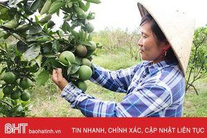 Vườn đồi Ngọc Sơn bạt ngàn cây ăn quả
