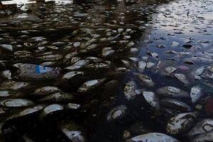 Những bức ảnh gây nhức nhối về ô nhiễm môi trường
