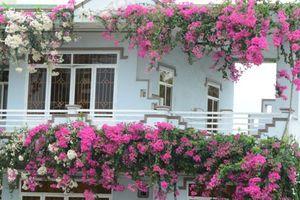 Ngẩn ngơ ngôi nhà 3 tầng ngập sắc hoa giấy Singapore ở Quảng Ngãi