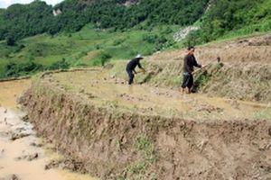 Khai hoang, phục hóa ruộng bậc thang ở Ðiện Biên