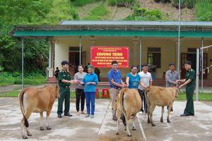 Trao bò giống cho các hộ nghèo ở xã biên giới Tam Hợp