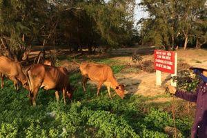 Bà Rịa-Vũng Tàu: Lãng phí những dự án du lịch bị bỏ hoang