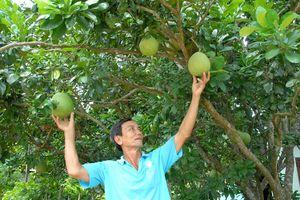 Giải pháp phát triển bền vững cây ăn quả vùng Nam bộ?