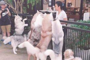 Quán cà phê khiến tín đồ yêu chó tan chảy ở Thái Lan
