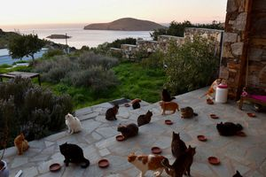 Việc làm như mơ cho người yêu mèo, yêu biển