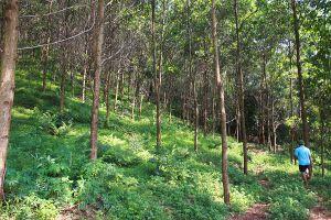 Yên Bái: Tập trung nâng cao chất lượng rừng