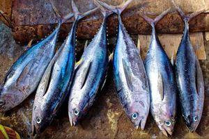 Chợ đấu giá cá ngừ nổi tiếng lao đao vì nắng nóng kỷ lục tại Nhật Bản