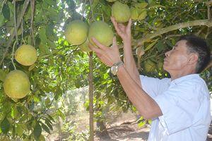 Huyện Mỹ Đức phát triển các mô hình sản xuất nông nghiệp an toàn