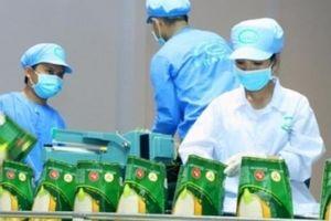 Gạo sạch ITA RICE đạt nhiều chứng nhận chất lượng cao