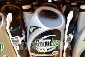 Nhiều cửa hàng tại Anh xem xét ngừng bán thuốc diệt cỏ Roundup của Monsanto