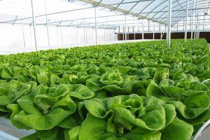 Thị trường thực phẩm hữu cơ: Cung - cầu chưa gặp nhau