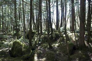 Bé 2 tuổi lạc ba ngày trong rừng Nhật Bản vẫn sống sót