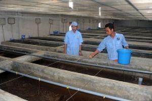 Bình Định phát triển chăn nuôi chất lượng cao