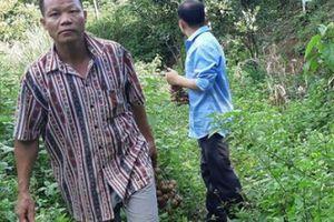 'Lâm tặc' trả nợ rừng: Phủ kín đồi trọc bằng cam, nhãn, táo đại