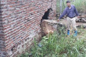 Nhà máy xi măng Long Sơn nổ mìn khai thác đá ảnh hưởng tới nhà dân