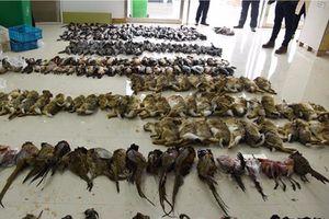 Cảnh sát Trung Quốc thu giữ hơn 50.000 động vật hoang dã