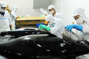 Xuất khẩu cá ngừ có khả năng đạt mục tiêu 500 triệu USD năm 2018