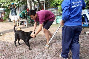 TP HCM: Sau 1 tháng tuyên truyền, quận 1 ra quân bắt chó thả rông