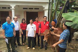 Tặng bò giống do U23 Việt Nam ủng hộ cho các hộ gia đình khó khăn Phú Thọ