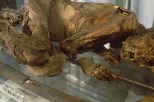 Phát hiện bất ngờ về xác ướp Ai Cập 5.500 năm tuổi