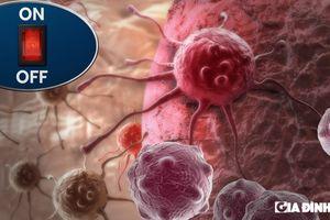 Bước đột phá trong điều trị ung thư: Tìm thấy cơ chế 'tắt' quá trình phân chia tế bào gây bệnh
