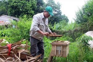 Nghề nuôi ong mật ở Minh Bảo