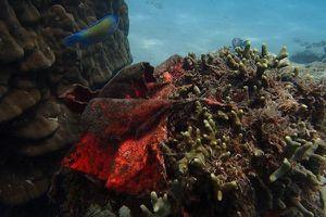 Báo động đỏ: Ai bảo vệ rạn san hô biển gần bờ?