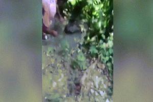 Ấn Độ: Cả gan sờ đầu cá sấu khổng lồ và tích tắc 'tử thần'