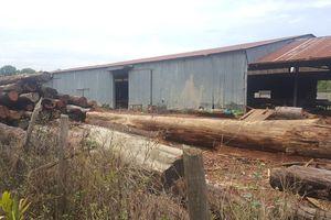 Để trùm gỗ lậu Phượng 'râu' tung hoành, nhiều kiểm lâm bị xử lý