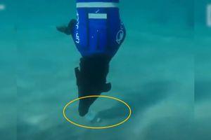 Clip: Chú chó siêu năng lực từ 'thợ săn tôm hùm' đến 'thợ lặn nhặt rác'