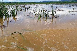 Thanh Hóa: 3 người chết và mất tích, hàng ngàn ngôi nhà bị nước nhấn chìm