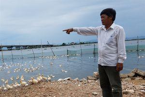 Thừa Thiên – Huế: 252 con vịt chết không phải do dịch