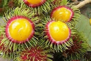 Chôm chôm ruột vàng lại tái xuất gây 'sốt' thị trường Hà Nội