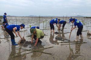 Quảng Ninh: Trồng rừng ngập mặn, bảo vệ hệ sinh thái ven biển