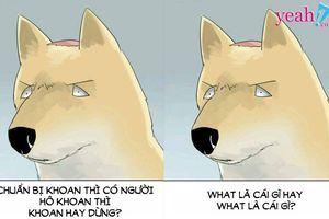 Chú chó và những câu hỏi 'down đần' khiến cư dân mạng 'xoắn não' vì không biết nên trả lời thế nào cho phải