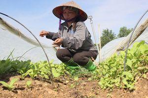 Nỗ lực phục hồi cây trồng sau ngập úng
