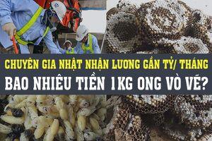 Kinh doanh hôm nay: Chuyên gia Nhật đến Việt Nam muốn nhận lương 700 triệu/tháng, kiếm tiền triệu mỗi ngày nhờ phá tổ ong vò vẽ