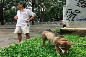 Chó thả rông: Đừng để quy định chỉ đặt ra... cho vui