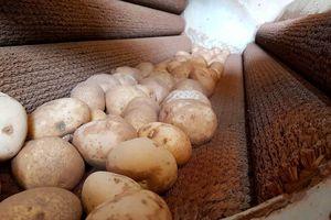 Bắt quả tang trộn đất vào khoai tây Trung Quốc để bán giá cao